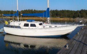 Finnrose 45 -81